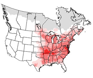 Summer range of the eastern wood-pewee