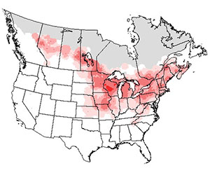 Summer range of the rose-breasted grosbeak